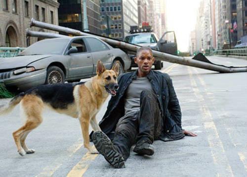 Will Smith y un amigo (Abbey) en I AM LEGEND (2007)